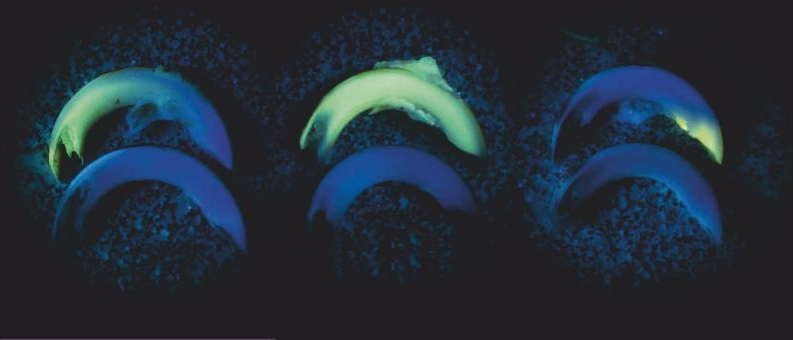 Флуоресцентная метка